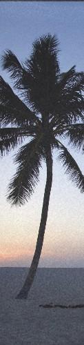 Palmtree Custom longboard griptape