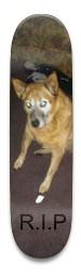 Dog Park Skateboard 8.5 x 32.463