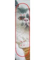 Bert grip Custom skateboard griptape