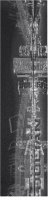 City Music Custom longboard griptape